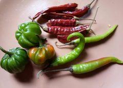 Indyjskie papryczki chilli
