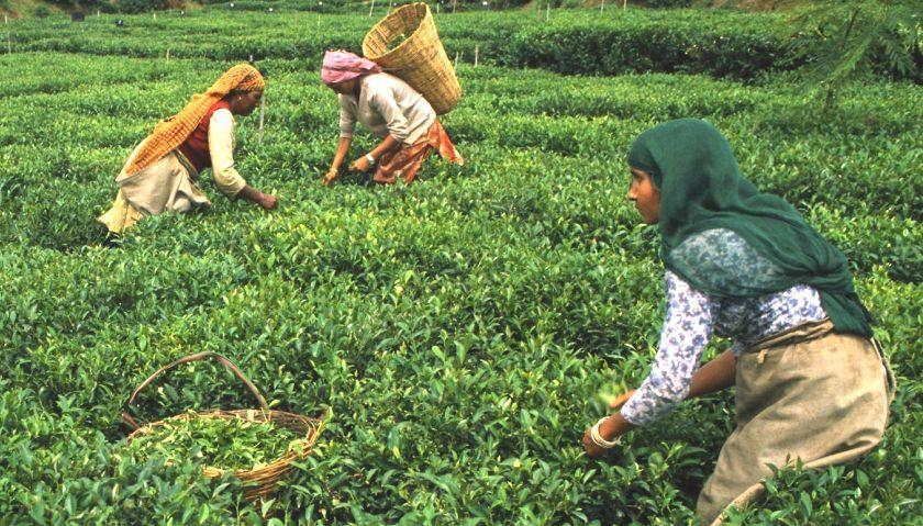Ilam, Nepal i promocja turystyki herbacianej