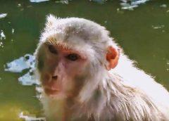 Puri małpi świat