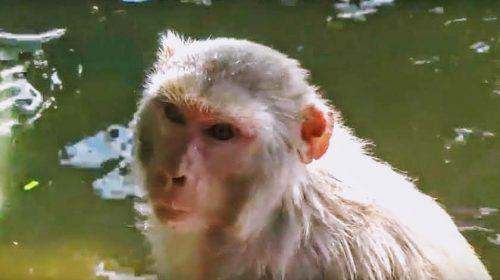 Ramayana: małpi świat