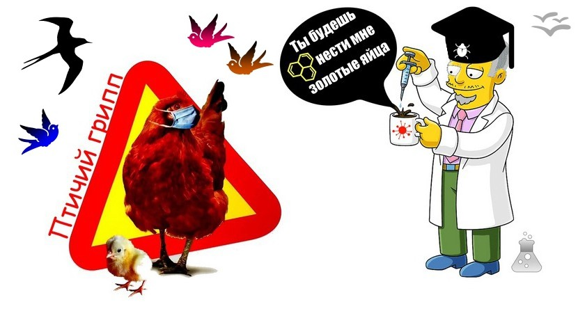 Новый птичий грипп