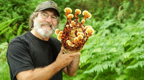 Пол Стеметс — всё о грибах