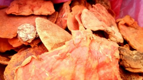 From a basket of a Nepali medic: Reishi