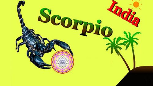 A story of finding a scorpion in our backyard, India